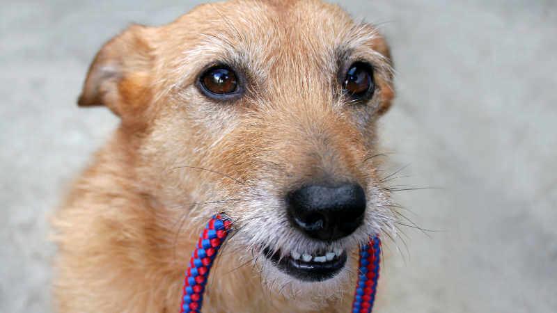dog-friendly-park-lake-macquarie-dog-lead