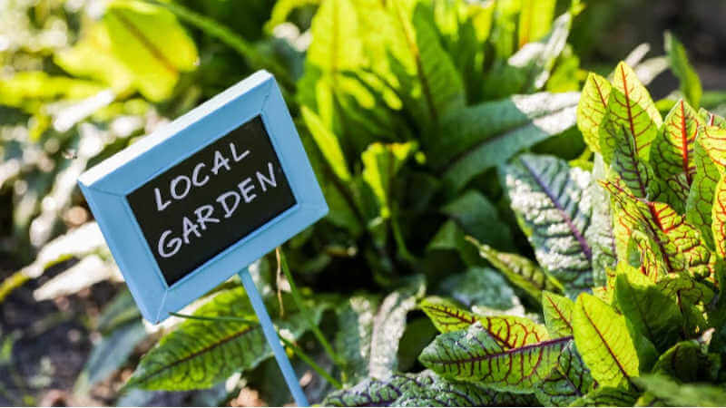 lake-macquarie-community-groups-gardening
