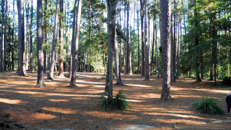 walking-tracks-lake-macquarie-watagans-pines-picnic