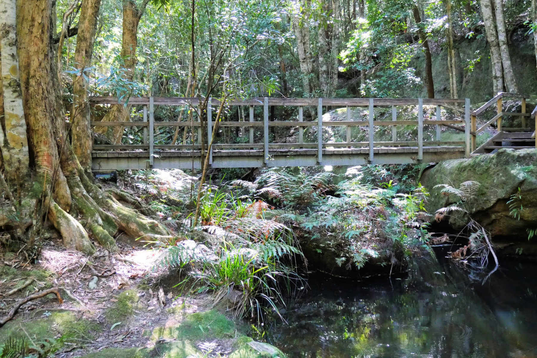 watagans-state-forest