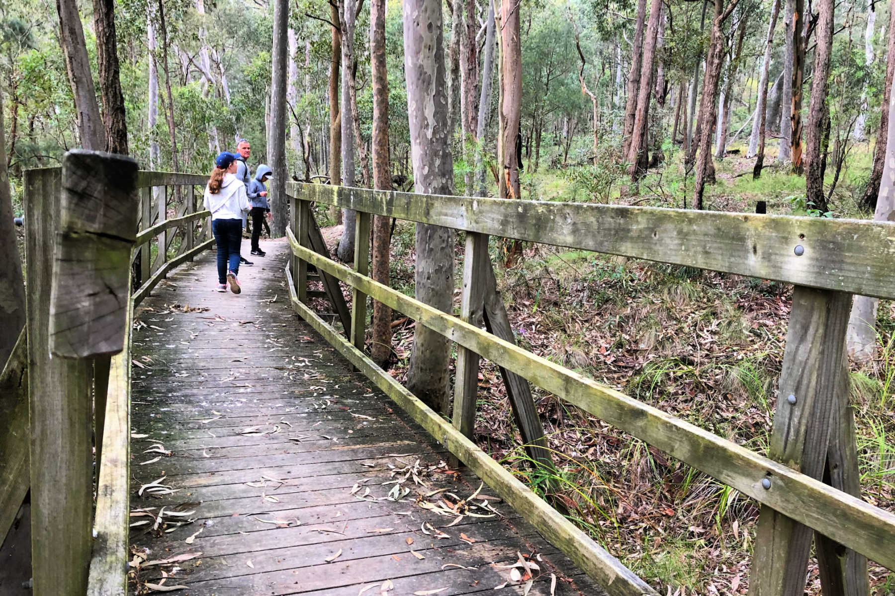 Awaba-Bay-Foreshore-Walk-main
