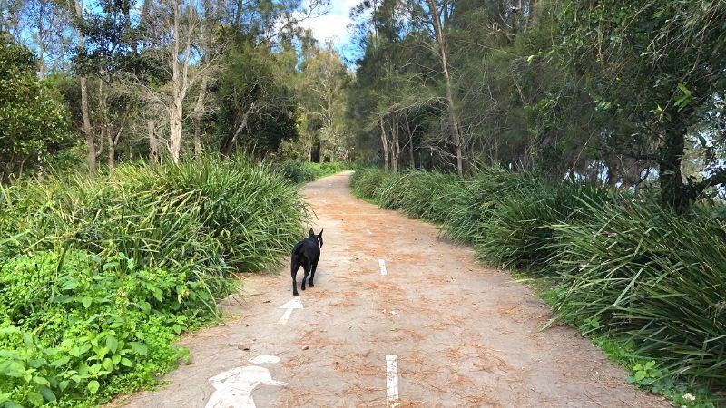 osmond-reserve-swansea-beach-bay4