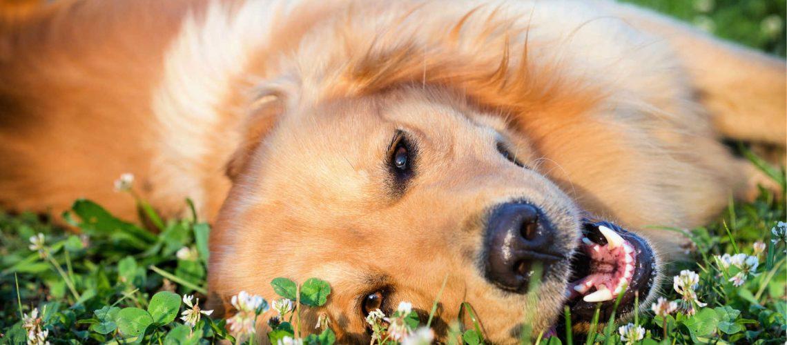 dog-friendly-lake-macquarie-main