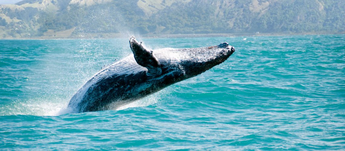 whale-watching-lake-macquarie